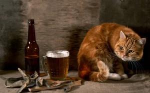 cat_beer_glass_observation_still_life_35303_2560x1600